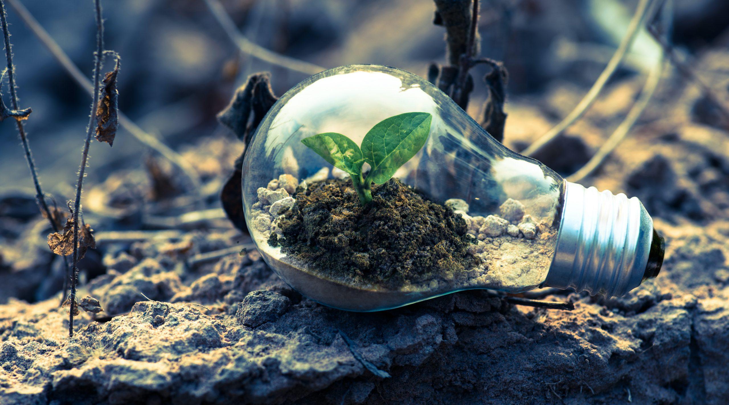 comunicare la sostenibilità